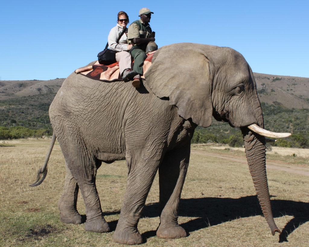 elephant safari activity
