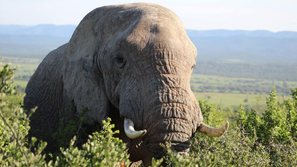 elephant tours South Africa