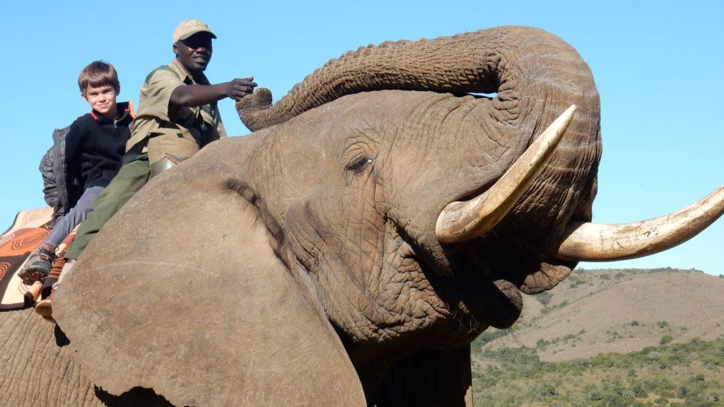 elephant parks South Africa